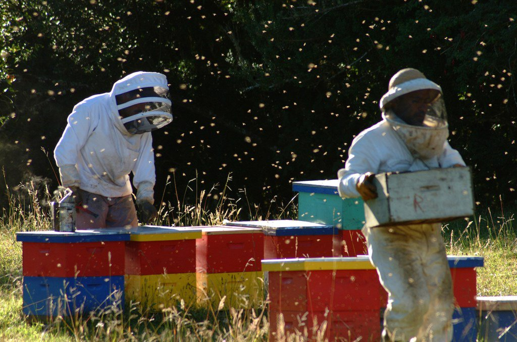 Honey, Blueberries & Dreams: The life of a Chilean Beekeeper