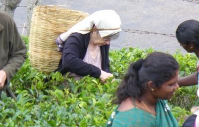 Ann picking tea