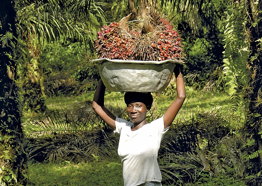 palm oil picker 3