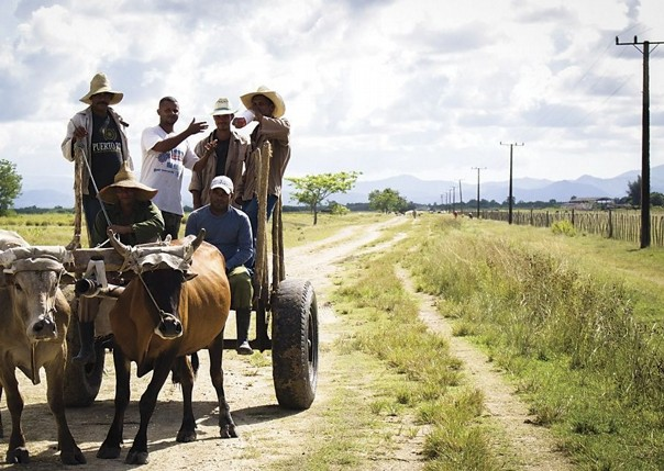 Local Farming.jpg - Cuba - Meet the People Tours