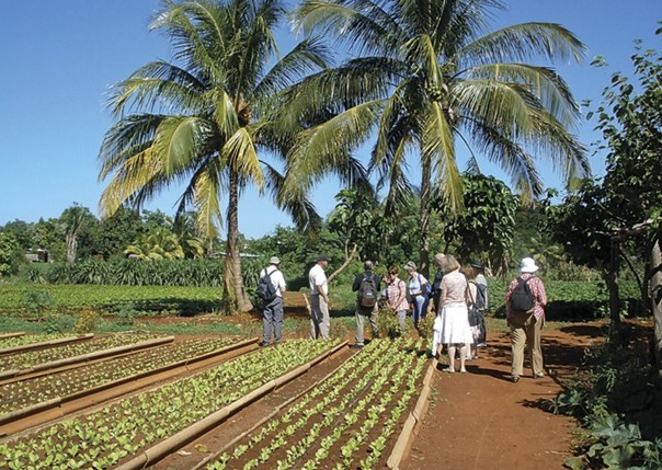Organic Farm, Havana.jpg - Cuba - Meet the People Tours