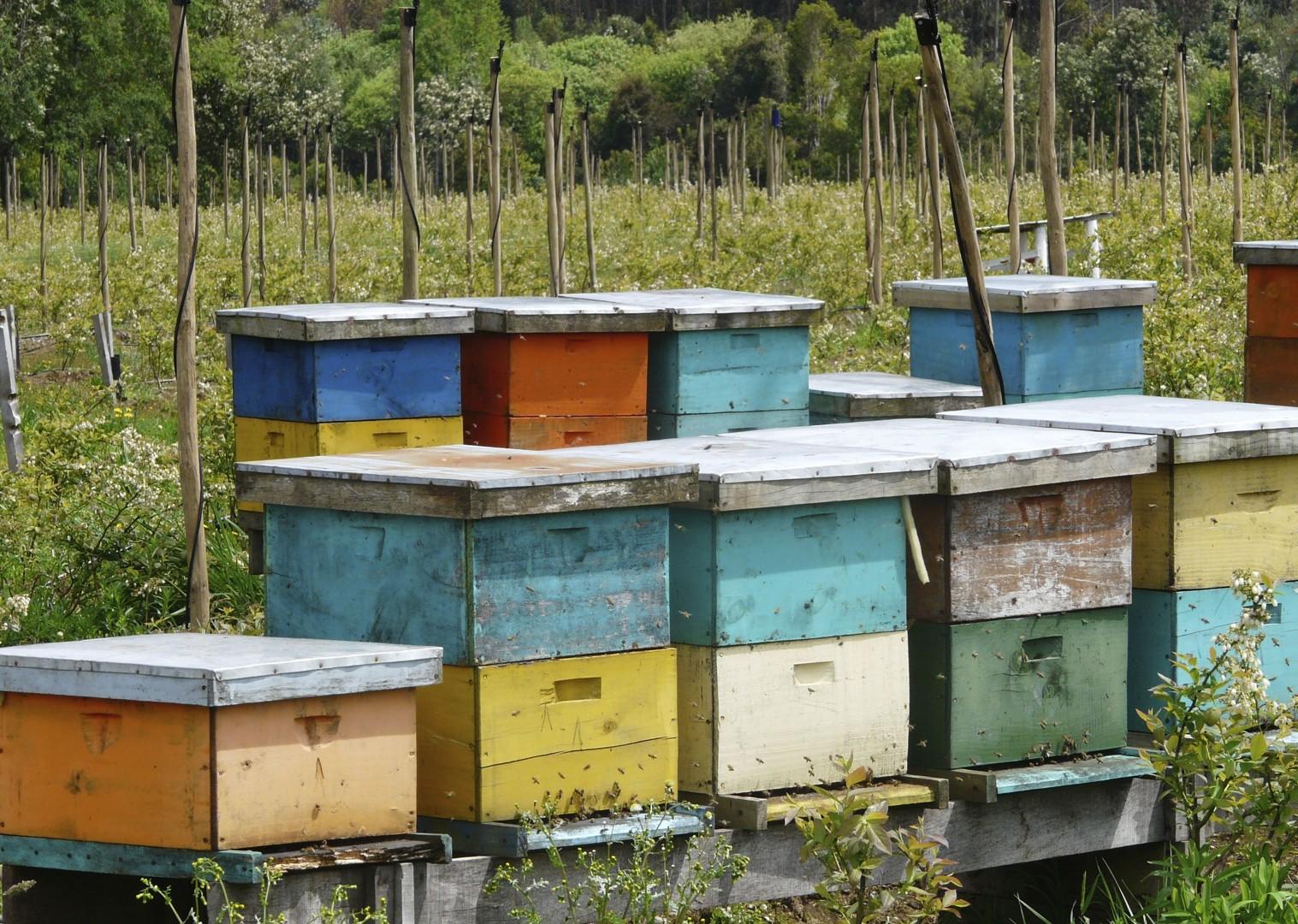 Beehives at Apicoop.jpg - Chile - Meet the People Tours