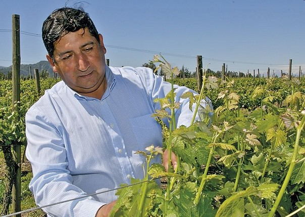Checking the grapes.jpg - Chile - Meet the People Tours
