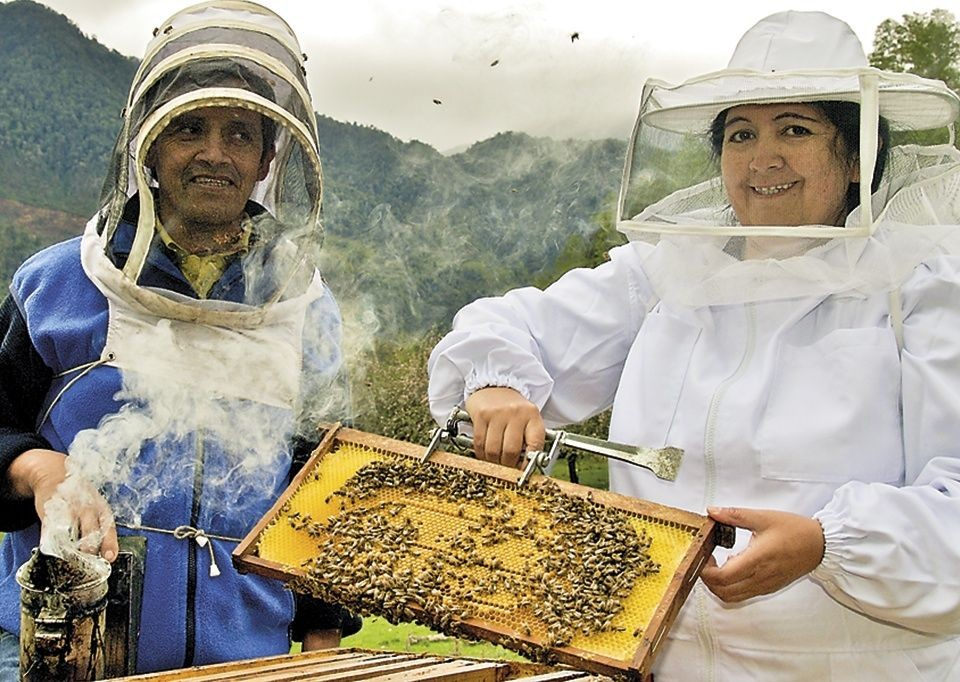Collecting Honey.jpg - Chile - Meet the People Tours