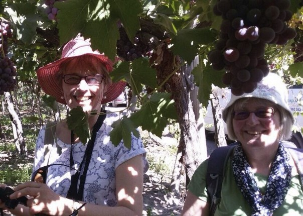 Picking Grapes.jpg - Chile - Meet the People Tours