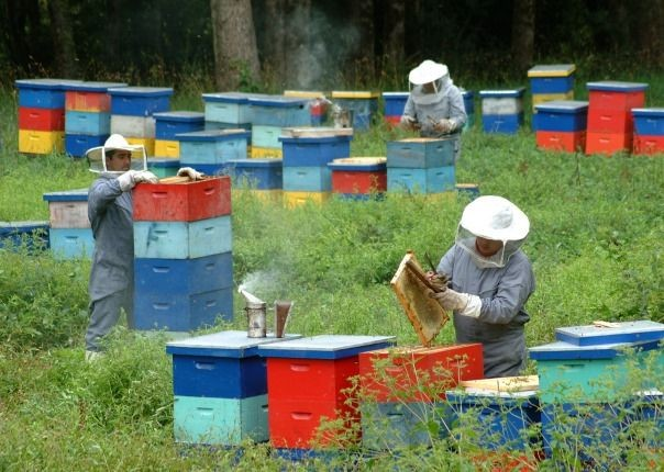 Beehives.jpg - Chile - Meet the People Tours