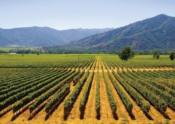 Chile Vinyards.jpg - Chile - Meet the People Tours