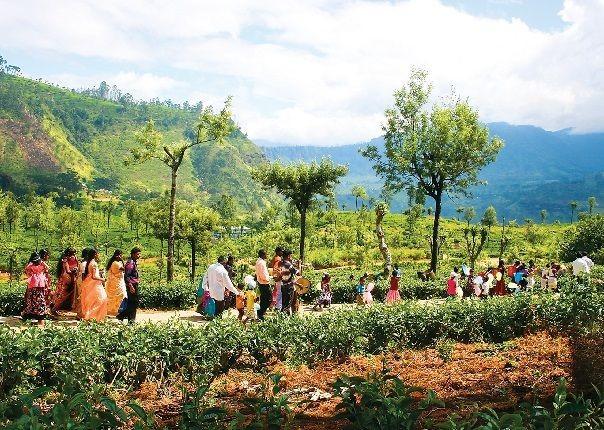 Stunning Sri Lanka Image