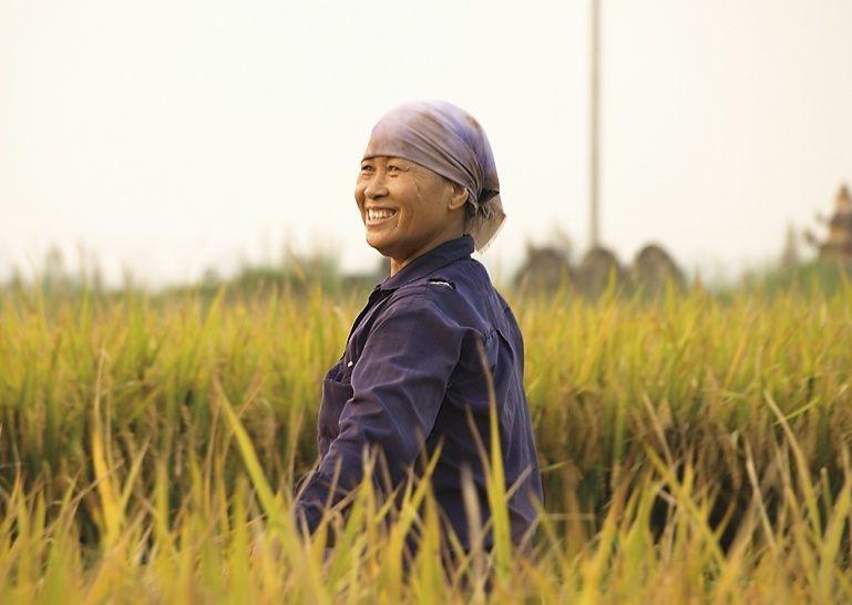 Rice Farmers.jpg - Vietnam - Meet the People Tours