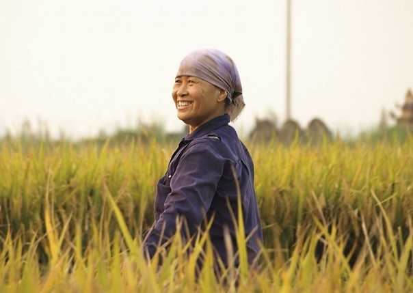 Rice Farmers.jpg - Vietnam - Meet the People Tours
