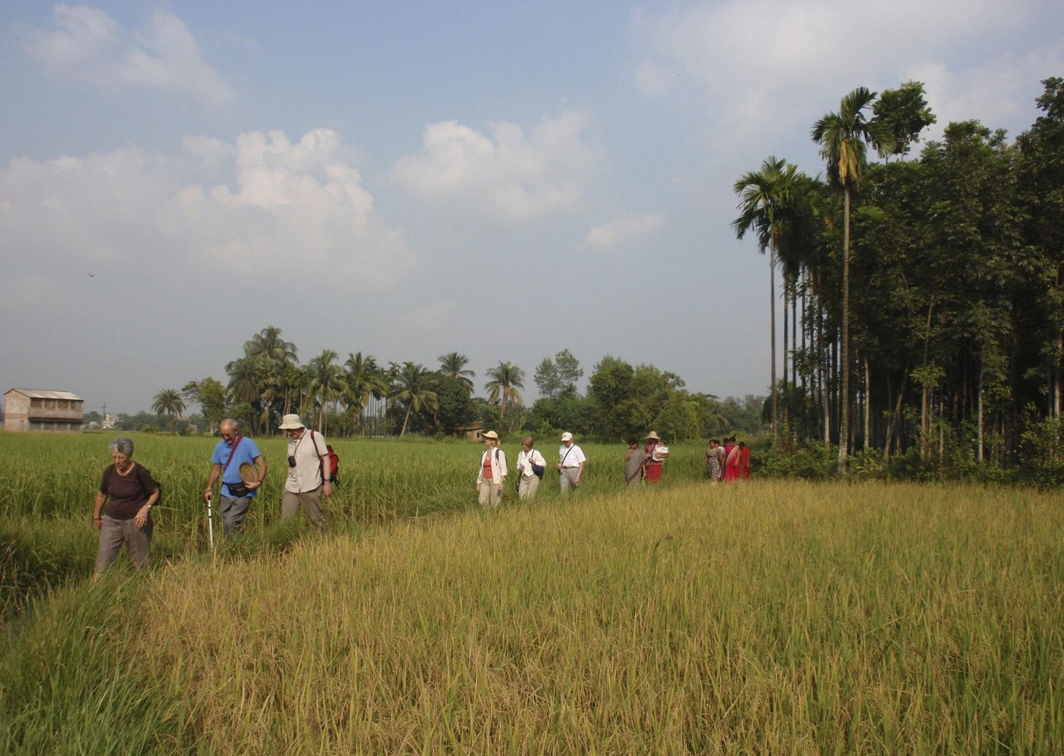 Walking through paddy fields.jpg - Northern India - Meet the People Tours