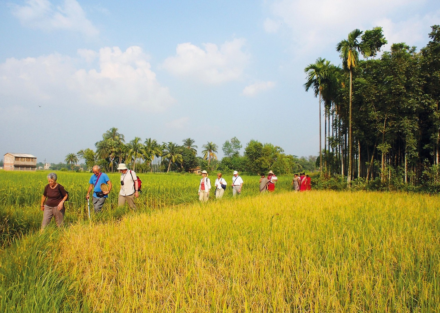 Paddy fields.jpg - Northern India - Meet the People Tours