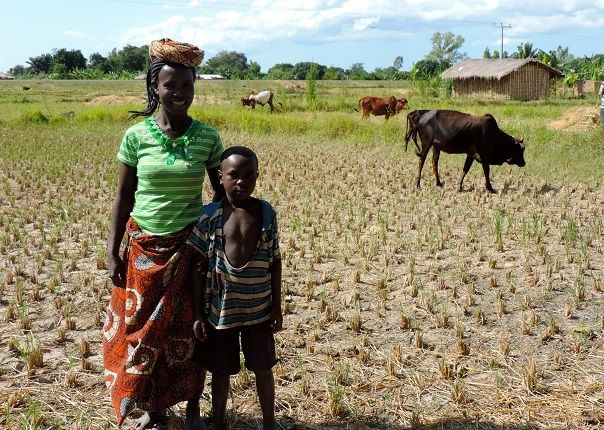 Karonga Rice - Malawi - Meet the People Tours