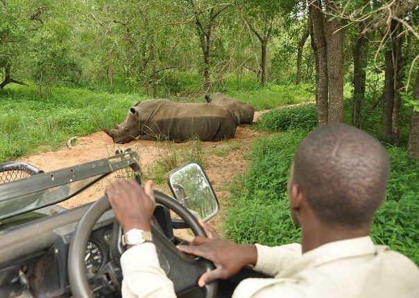 Mkhaya Rhinos - Swaziland - Meet the People Tours
