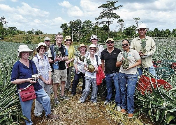 Fairtrade Pineapples - Costa Rica - Meet the People Tours