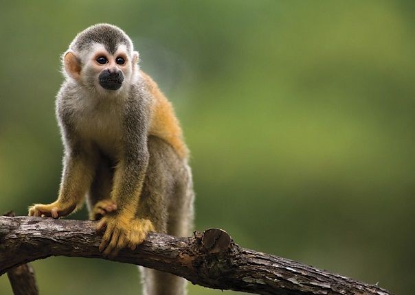 Local Monkey - Costa Rica - Meet the People Tours
