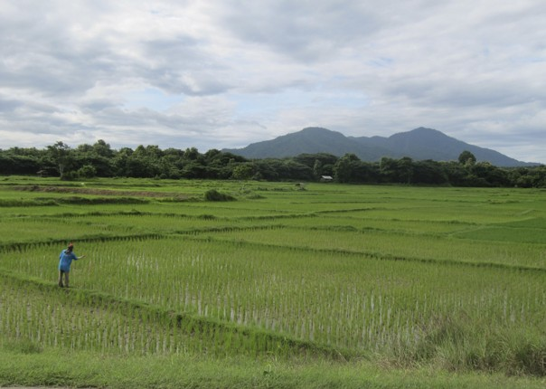 Rice fields.jpg - Thailand - Meet the People Tours