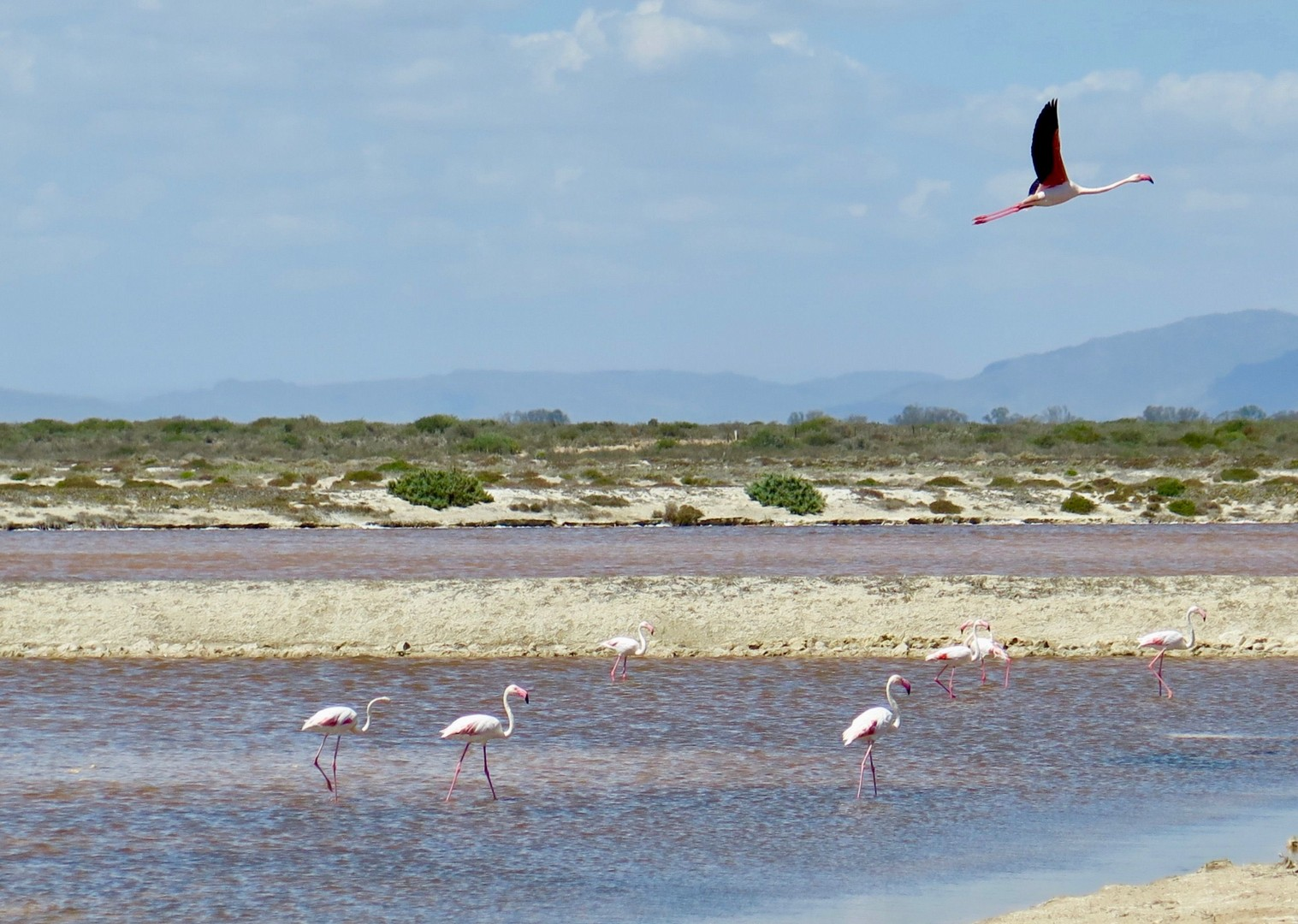 Khoisan Flamingoes.jpg - South Africa - Meet the People Tours